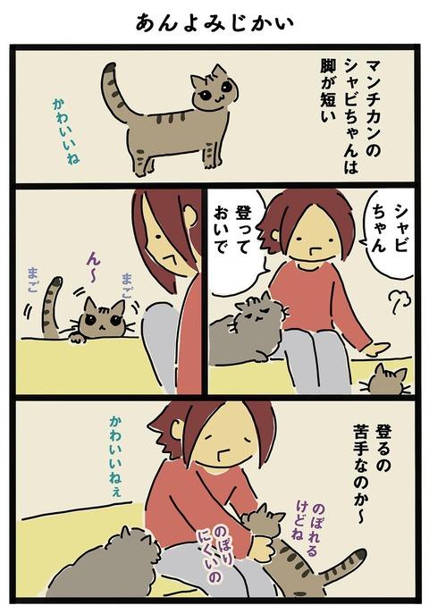 iwako_cat_256