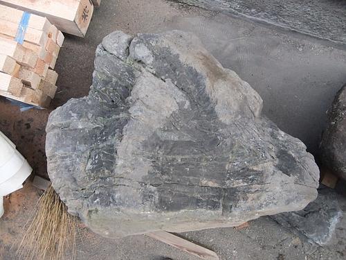 DSCF5981
