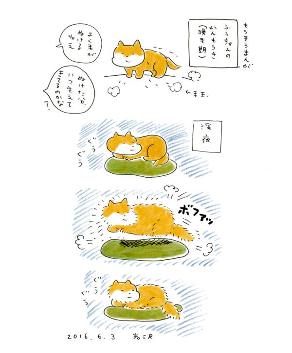 20160603_inu