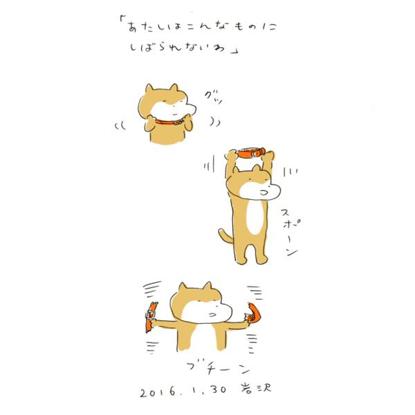 20160130_inu
