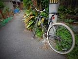 自転車 路地