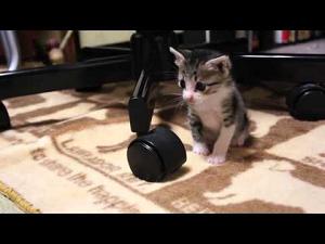 """【猫動画】""""こんなの初めて""""・・・"""