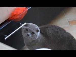 【猫動画】子猫好き必見!おもしろハプニング猫ちゃん動画まとめ!