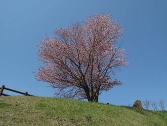 05_02_旭山公園
