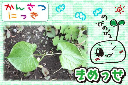 花壇まめっせ1