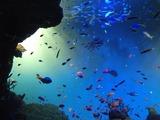 IMG_6561水族館
