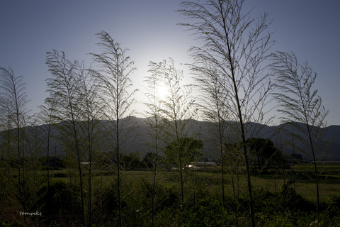 周桑梅雨の前に2017-2