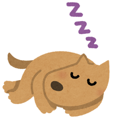sleep_animal_dog