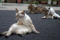 夏バテしている猫達[1]