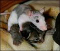 mousevscat[1]