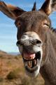 funny-animals-13-898501_H154704_L[1]
