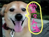 堂々人生犬