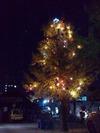 クリスマスツリー20111126