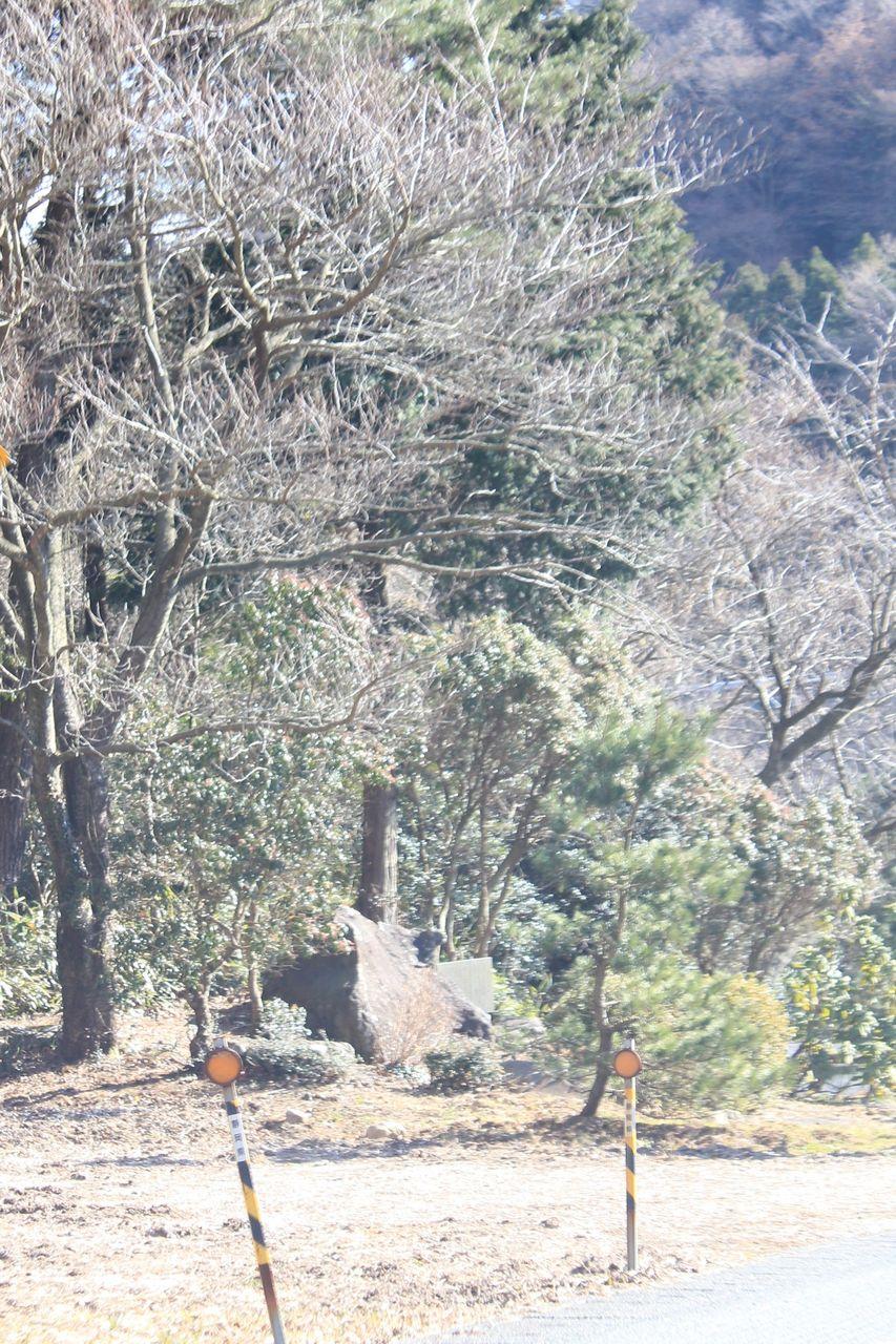 さちえの伊豆温泉情報:静岡県道19号伊東大仁線