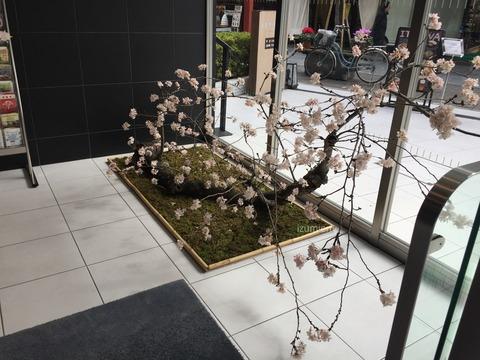 桜装飾 ホテルエントランス