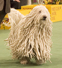 200px-Komondor_Westminster_Dog_Show_crop