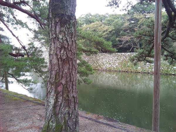 iinaosuke (1)