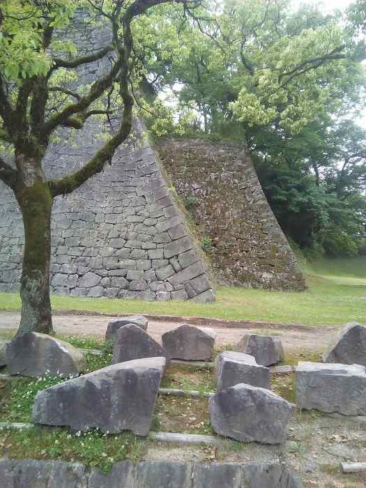 kumamotosiro (10)