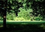北大植物園陰から陽