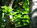 陽を浴びる葉2