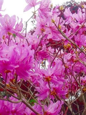 19-03-25-16-29-57-367_photo