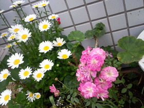 8fc8145e.jpg