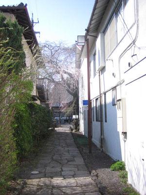 神宮寺の桜2