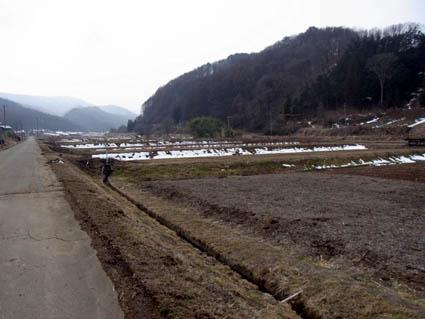 冬のブルーベリー畑