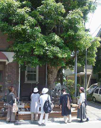 小林商会in鎌倉Plants