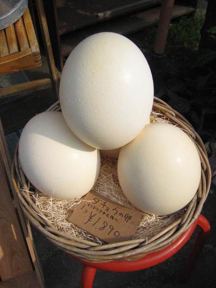 ダチョウ(駝鳥)卵 販売
