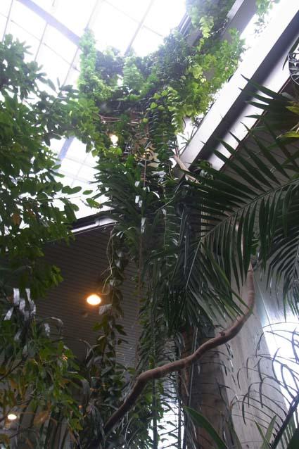 板橋熱帯環境植物館アルソミトラ