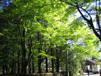 軽井沢の新緑