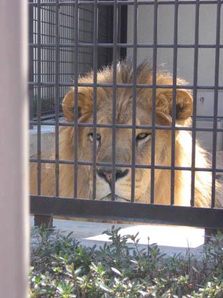 懐古園のライオン