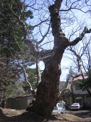 軽井沢 諏訪神社4