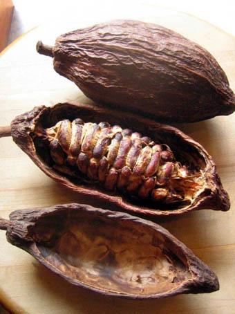 cocoa_pod_blog2
