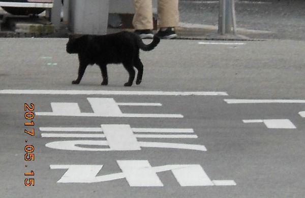 黒猫注意2017-05-15