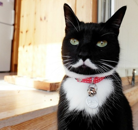 l-Stalin-the-Cat