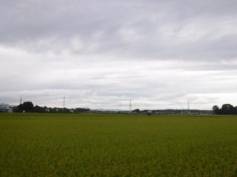 200919_上里-small_073