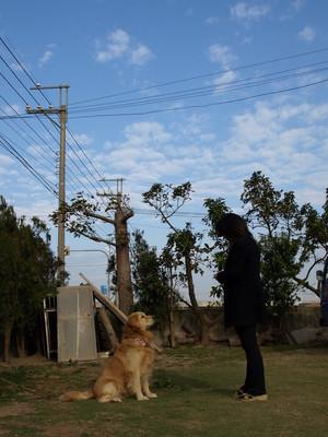 2008.3.1 AM8:10 苑裡の幸福犬:對我來説阿公・阿媽的老家就是蘇西の'苑裡'家