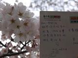 謝謝、桜色(sakurairo)の小V
