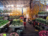 flowermarket (40)