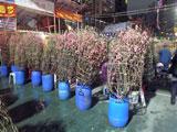 flowermarket (49)
