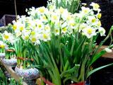 flowermarket (52)