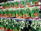 flowermarket (51)