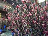 flowermarket (50)