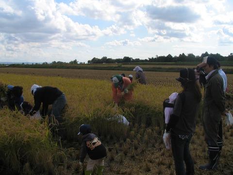 月形米収穫