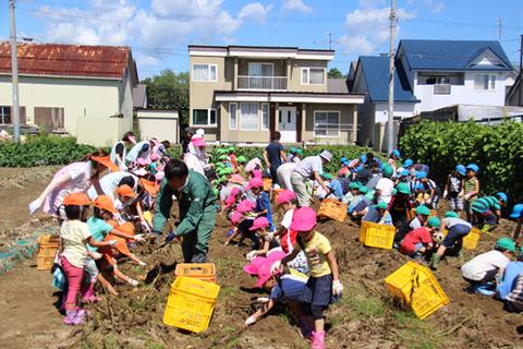 幕別幼稚園収穫 (33)ブログ