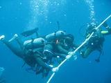 水中鯉のぼり20070508
