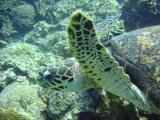 ウミガメ2-20070901