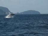 ザトウクジラ120070211